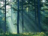 06.07.2012. Ceļvedis labklājībā: Cer glābt Latvijas mežus no ārzemniekiem ar kooperatīvu veidošanas palīdzību