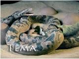 Gigantiskai čūskai nav izdevies aprīt dinozaura mazuli