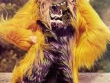 26.11.2012. Ceļvedis labklājībā: Latviešu topmodele  Ieva Lagūna no jauna izvēlēta par Victoria's Secret eņģeli